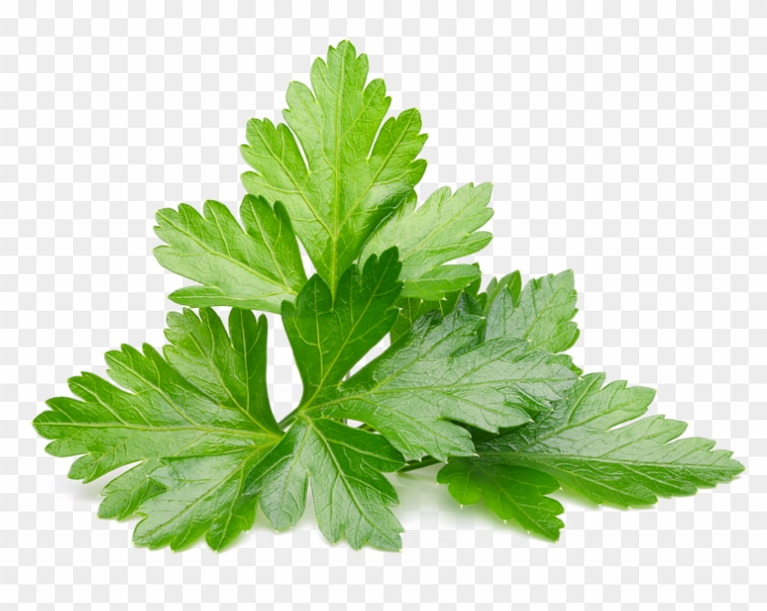 Parsley Png.