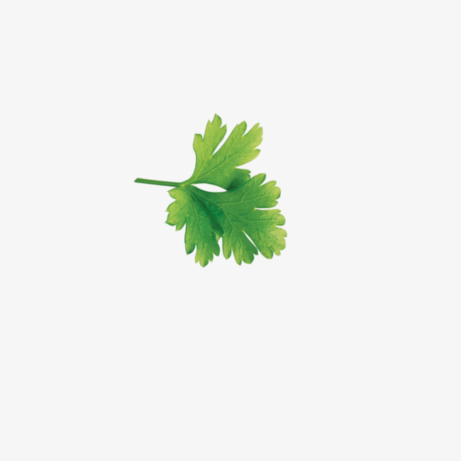Cilantro Png (112+ images in Collection) Page 2.