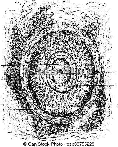 Vector Illustration of Section of a cilium and its hair follicles.