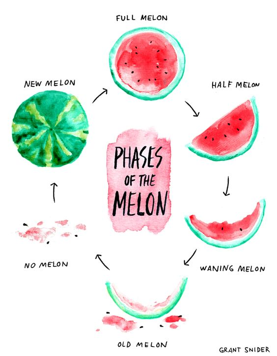 Phases of the Melon.