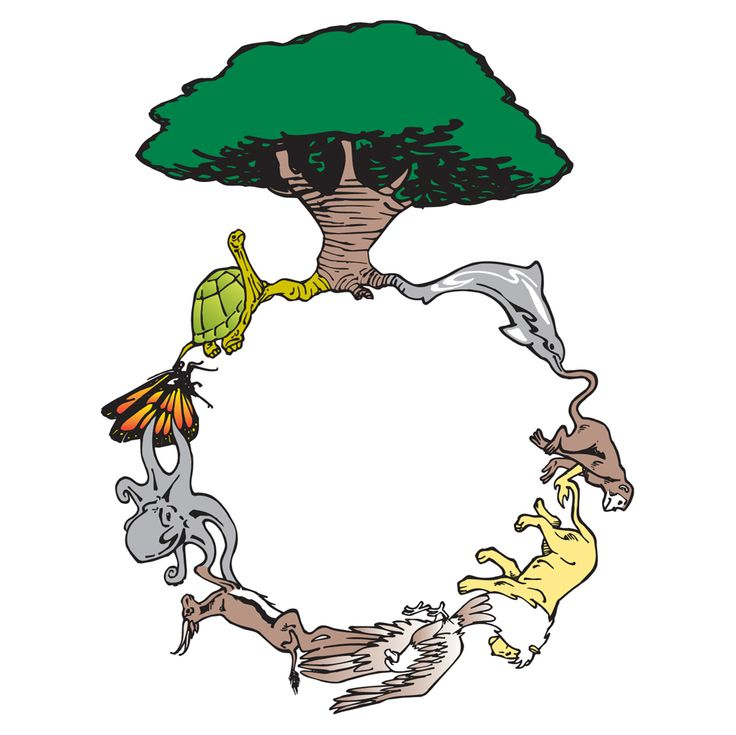 The circle of life, simplified to 8 animals and a tree..