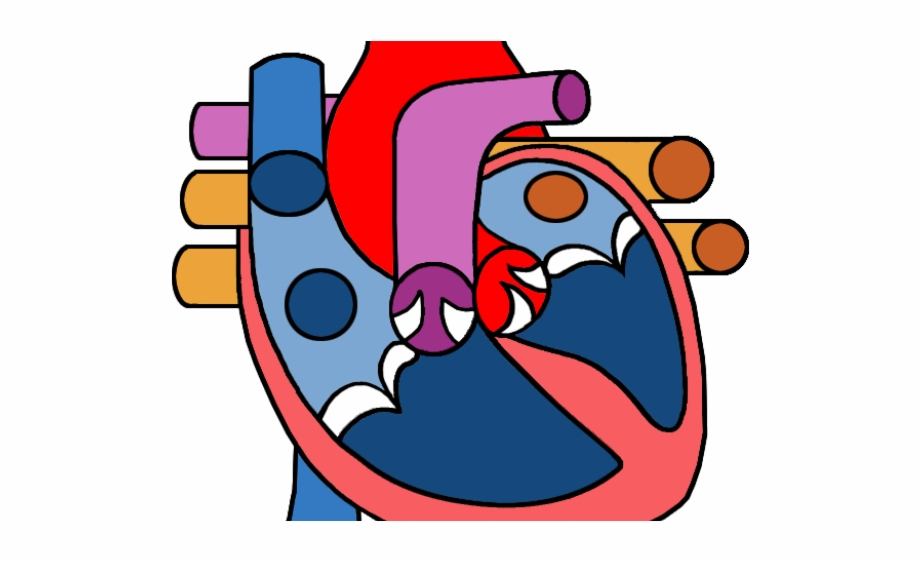 Heart Clipart Science.