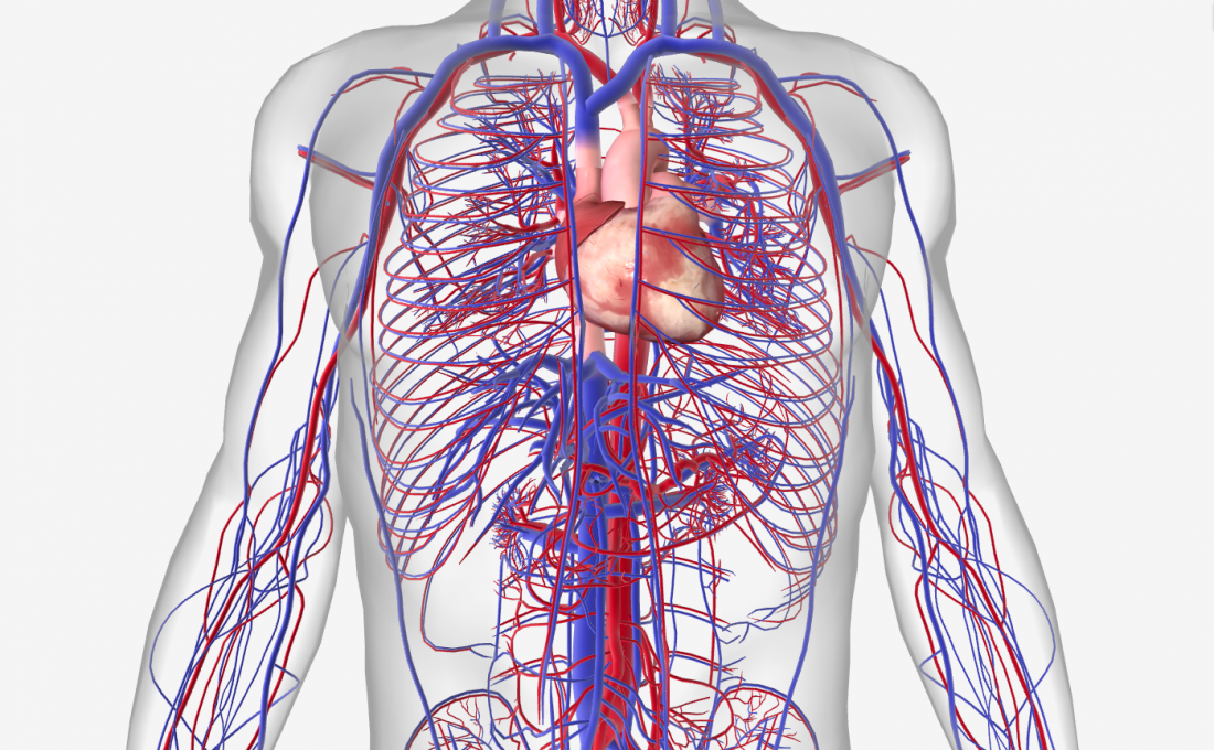 15 circulatory system diseases: Symptoms and risk factors.