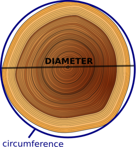 Circumference Of Tree Clip Art at Clker.com.