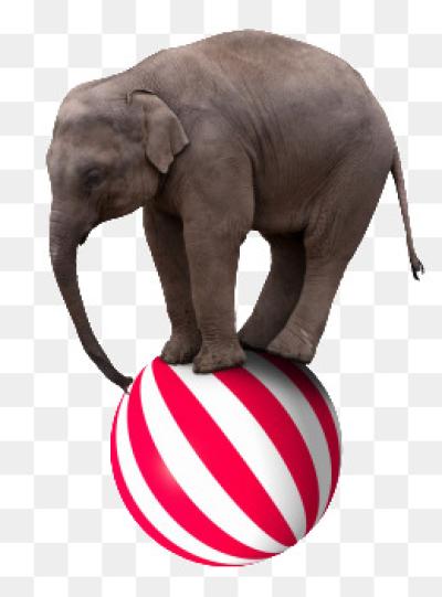 Elephant PNG.
