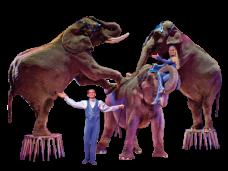 Elephant Cirque Png Vector, Clipart, PSD.