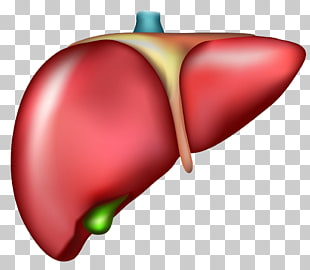 48 Cirrhosis PNG cliparts for free download.