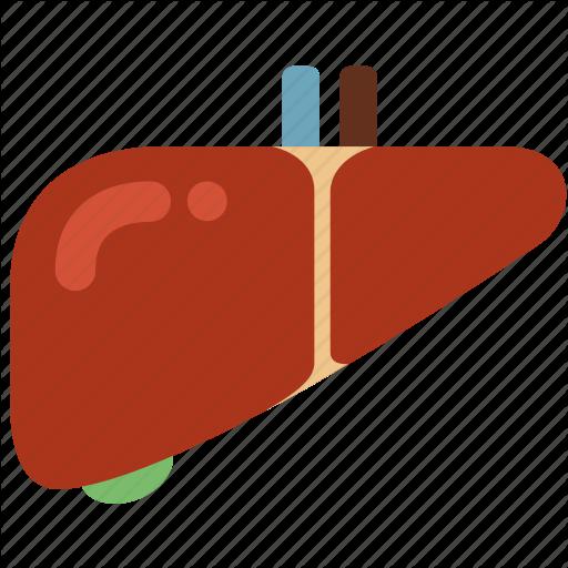 liver icon clipart Liver Hepatitis Cirrhosis clipart.