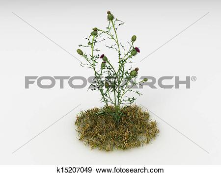 Stock Illustration of Cirsium vulgare k15207049.