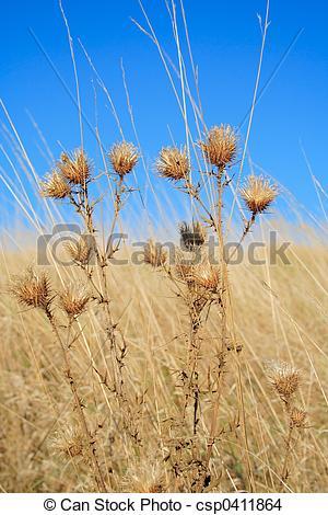 Stock Photo of autumn.
