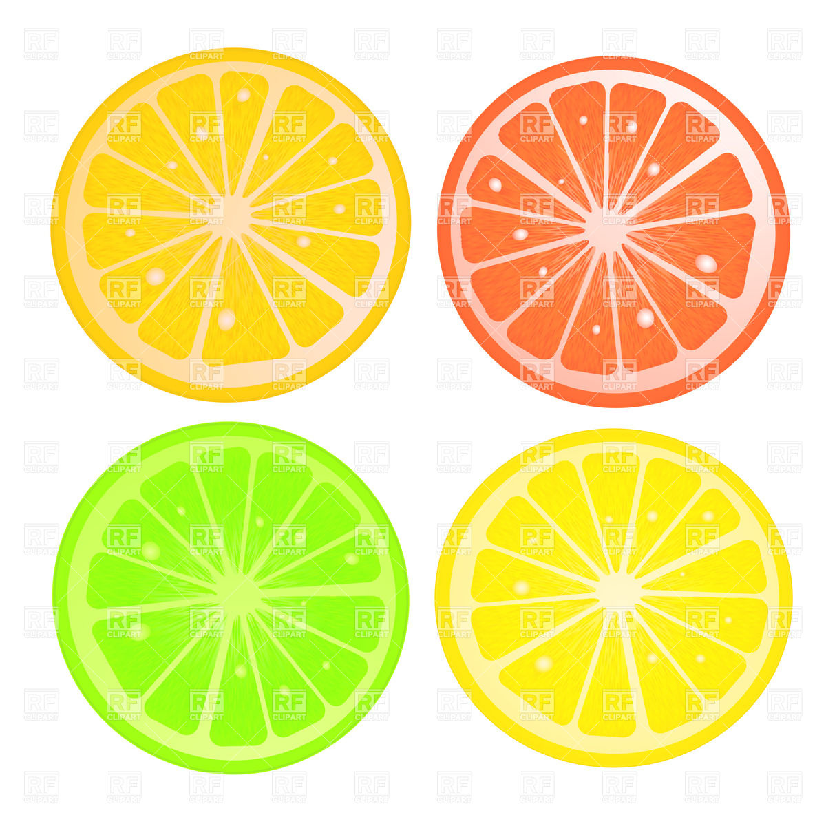 Various citric slices against white background Vector Image #20928.