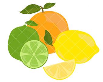 Citrus fruit clipart.