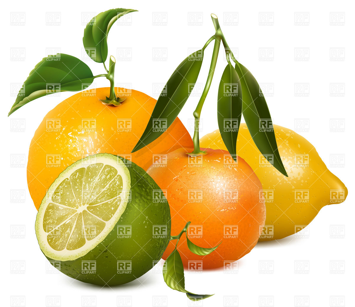 Tropical citrus fruits with leaves Vector Image #5031.
