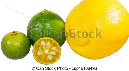 Stock Photographs of Calamansi, Lime and Lemon.