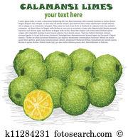 Citrofortunella Clip Art Illustrations. 3 citrofortunella clipart.