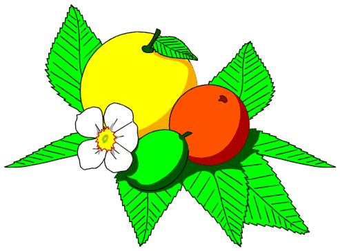 Citrus Fruit Clip Art Download.
