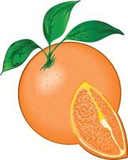 Citrus Clip Art, Vector Citrus.
