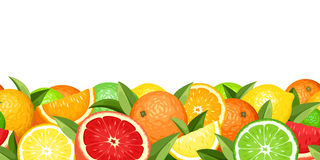Citrus Stock Illustrations.