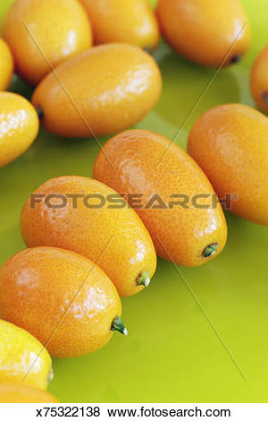 Pictures of Kumquat (fortunella) fruits, studio shot x75322138.