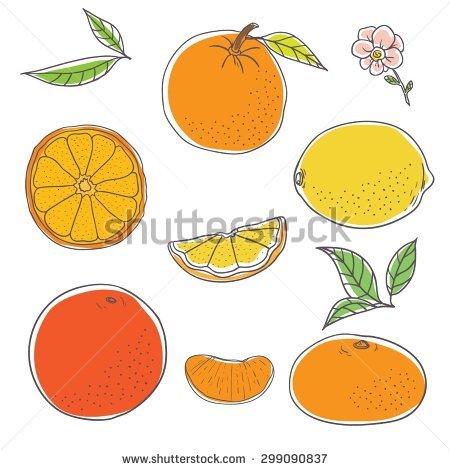 Orange Fruit Flower Isolated Stock Photos, Royalty.