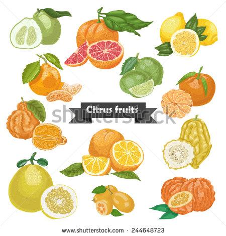 Kumquat Stock Vectors, Images & Vector Art.