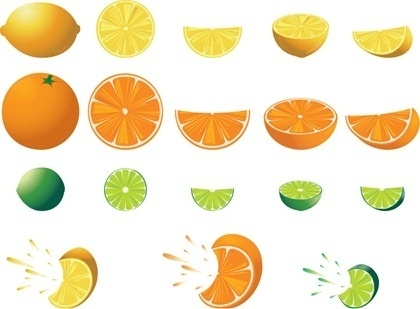 Citrus fruit clipart #17