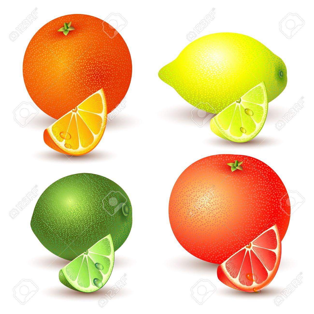 Set Of Citrus Fruit.