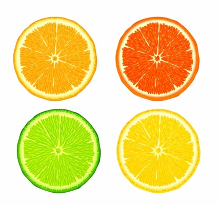 Citrus fruit clipart #5