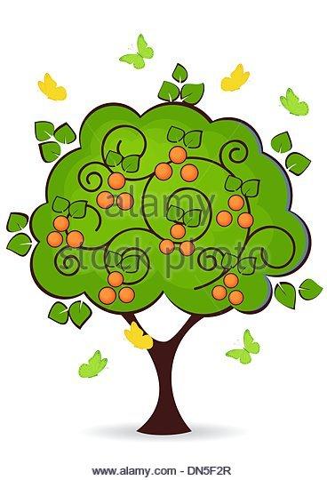 Mandarin Orange Tree Stock Photos & Mandarin Orange Tree Stock.