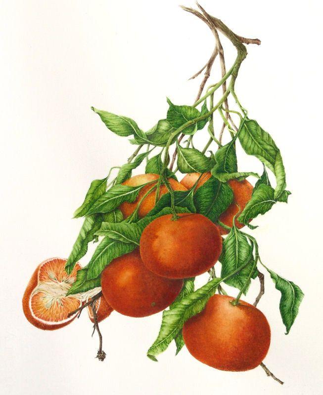 1000+ images about frutas vegetales on Pinterest.