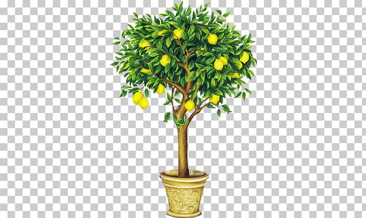 Lemon Tree Drawing , lemon PNG clipart.