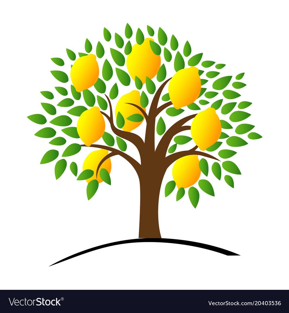 Lemon tree with green leaves.