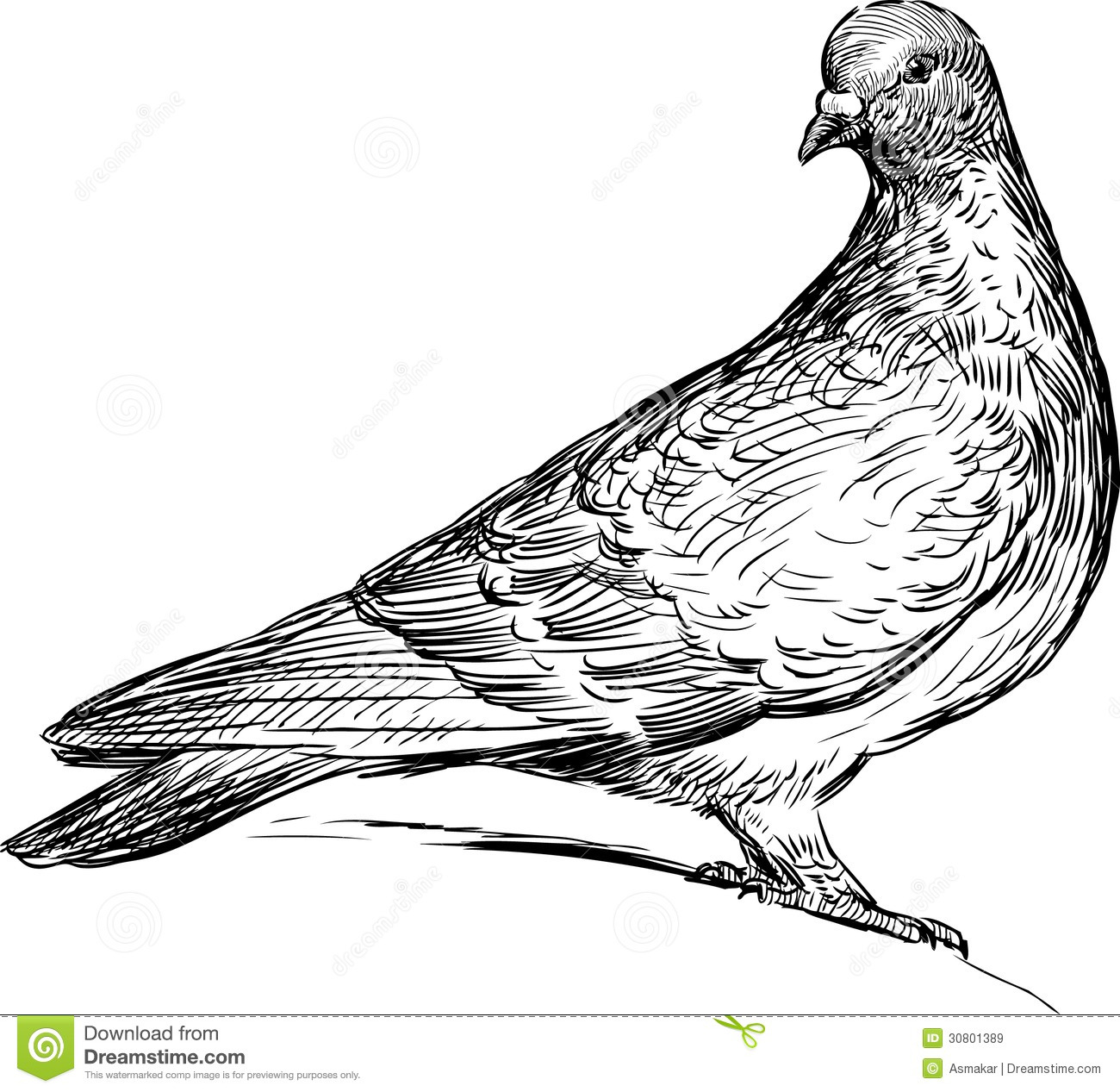 Pigeon Clip Art Black and White.