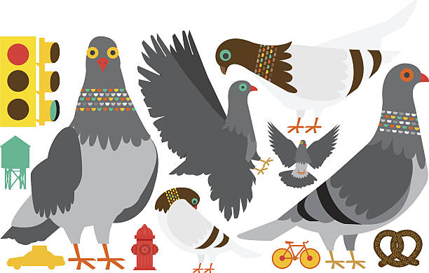 New York City Pigeon Clip Art, Vector Images & Illustrations.