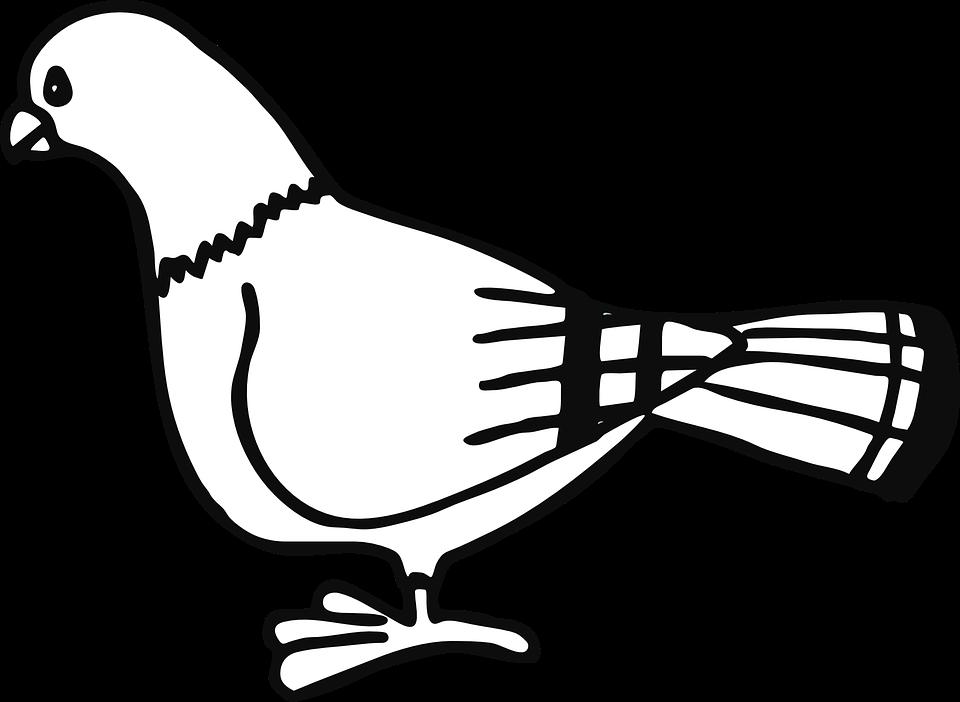Free vector graphic: Pigeon, Bird, Animal, Dove, City.