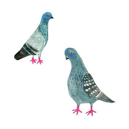 Pigeon Clip Art, Vector Images & Illustrations.