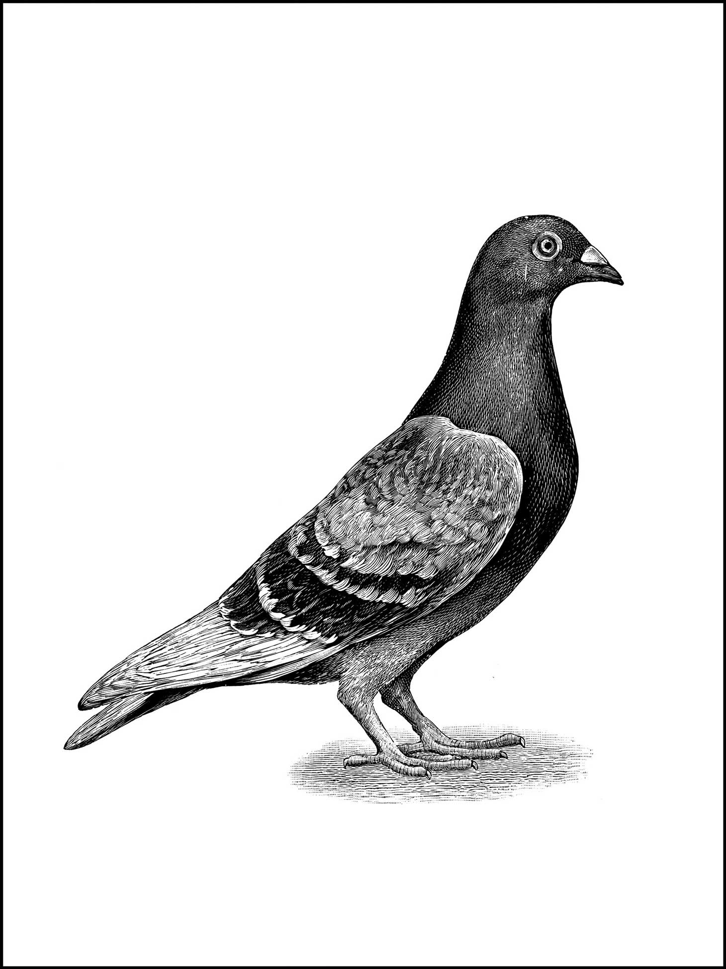 Carrier pigeon clipart rainbow color.