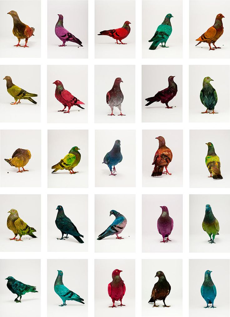 1000+ images about Pigeons.