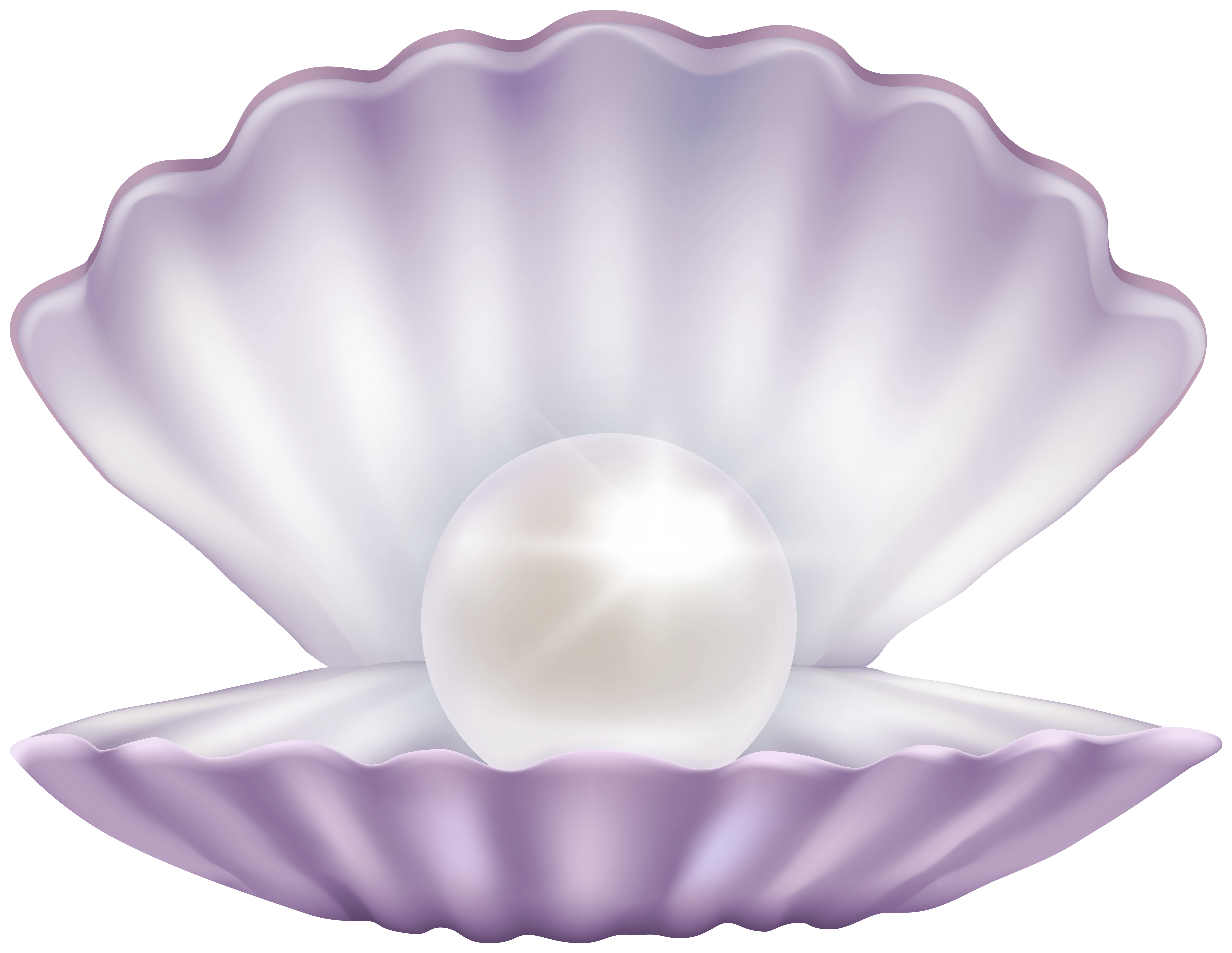 Clam with Pearl PNG Clipart.