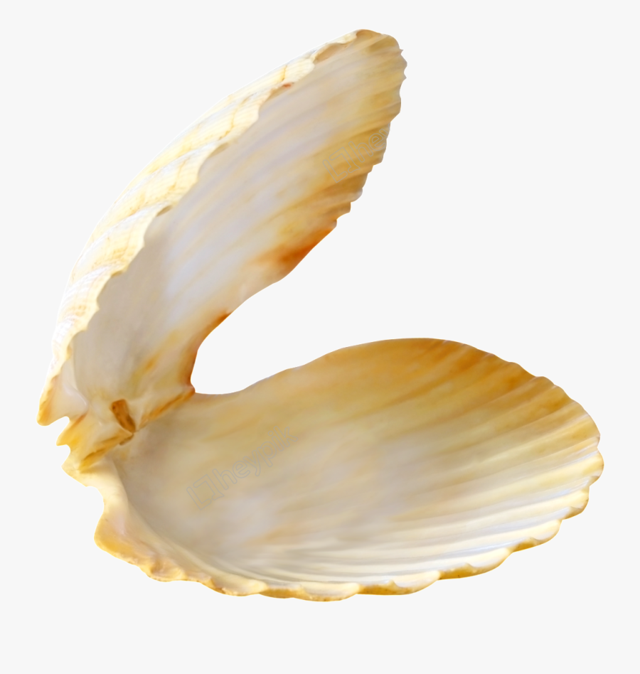 Transparent Clam Clipart.