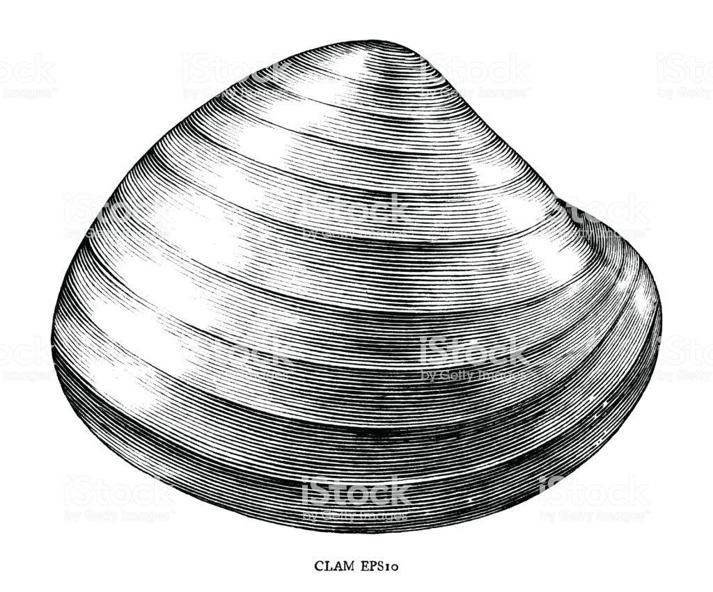 Antique Engraving Illustration Of Clam Black And White Clip.
