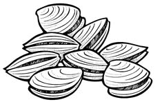 Clam clipart black and white 1 » Clipart Station.