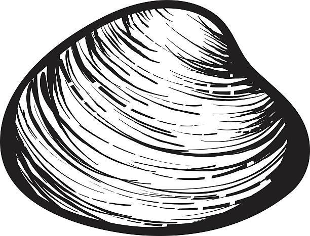 Clams clipart black and white 7 » Clipart Portal.