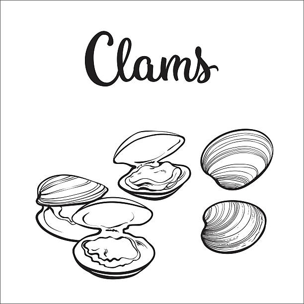 Best Clam Illustrations, Royalty.