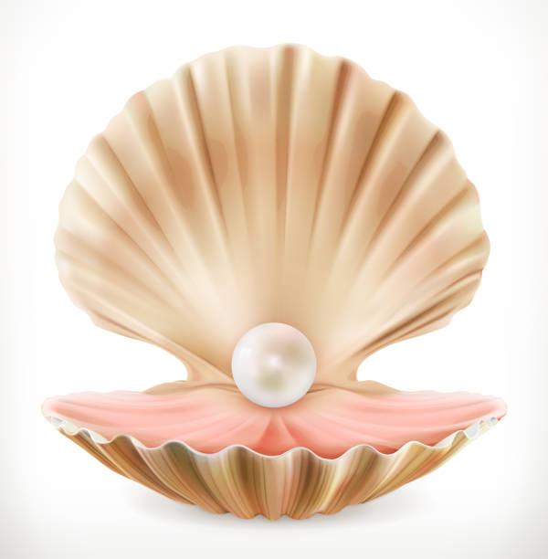 Best Open Clam Illustrations, Royalty.