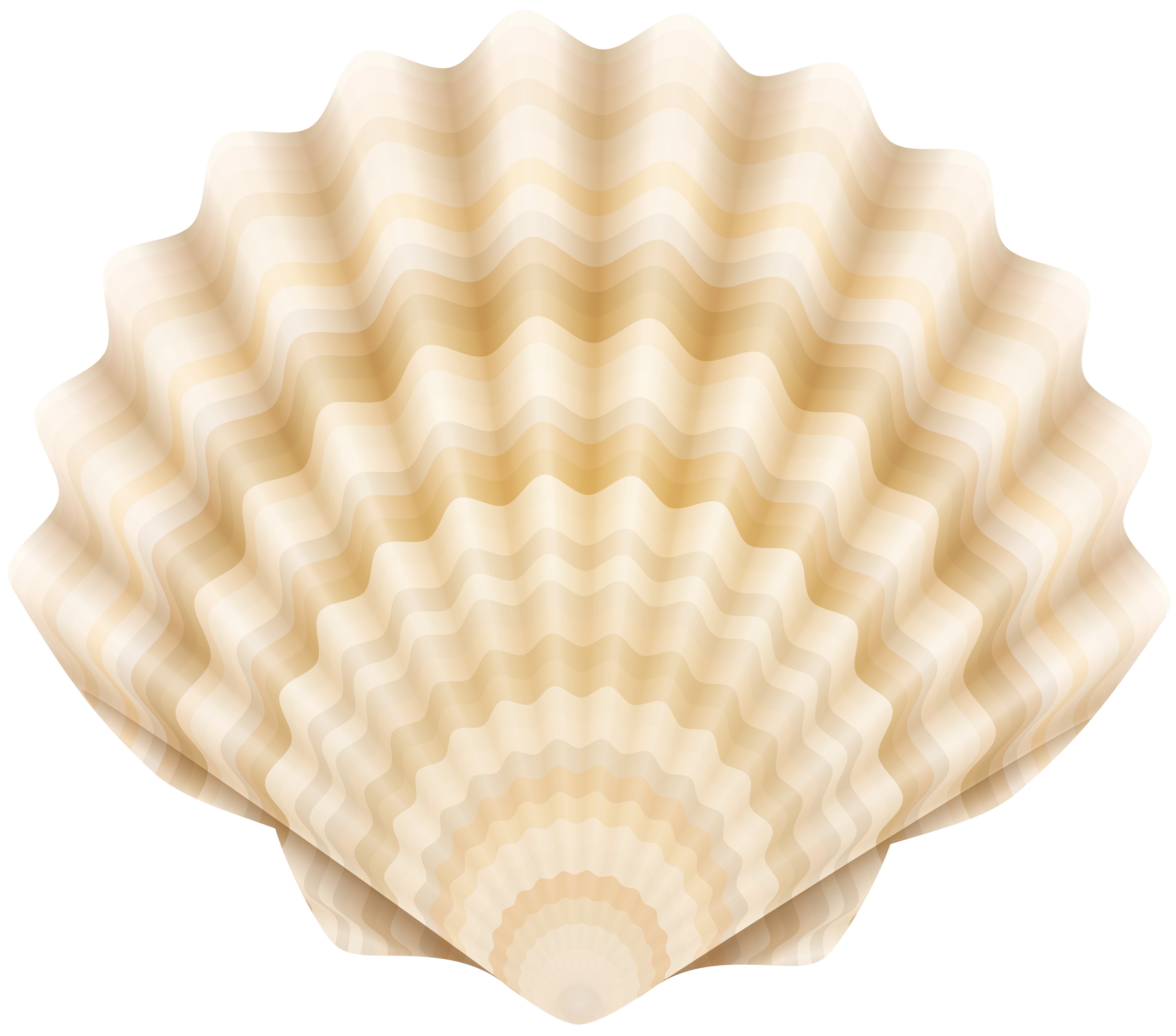 Clamshell Clip Art PNG Transparent Image.