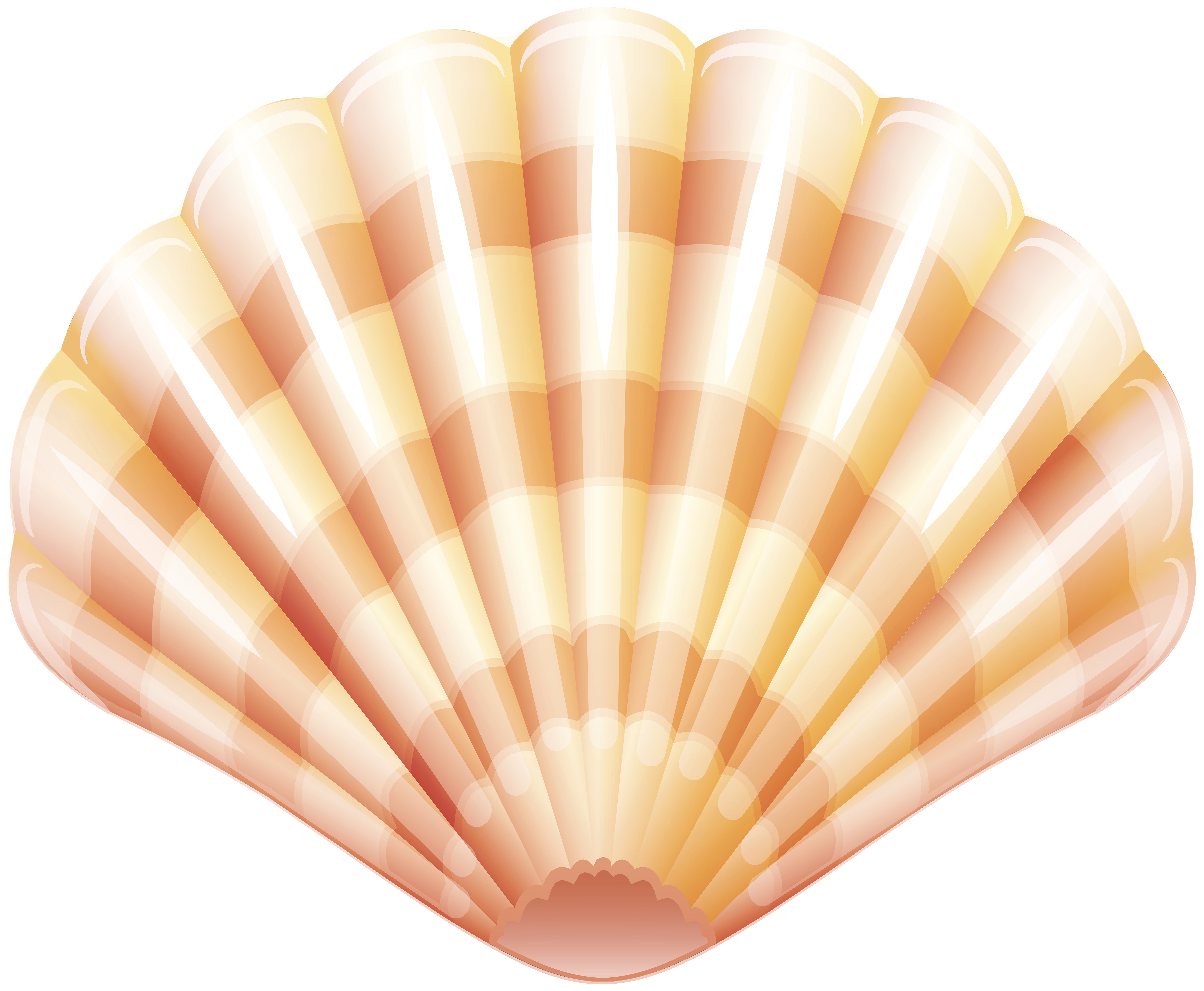 Sea Clam Shell PNG Clip Art Image.