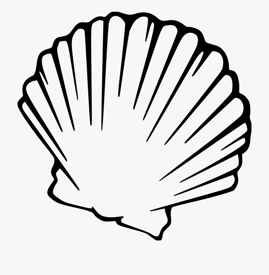 Black And White Png Clam Shell Clip Art , Transparent.