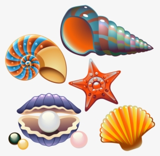 Free Clam Shell Clip Art with No Background , Page 2.