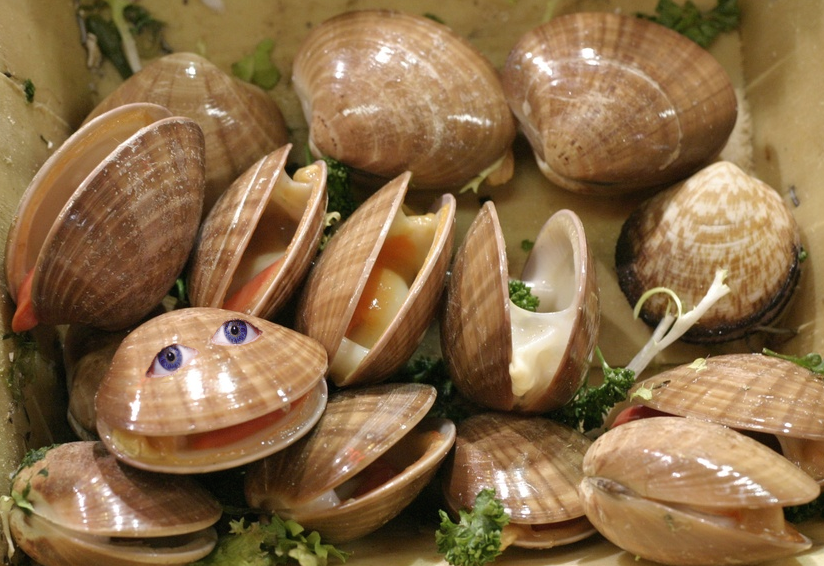 Why Are Clams so Damn Happy?.